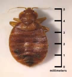 bed bugs fort wayne allen county department of health