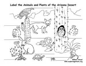 arizona desert animals coloring pages