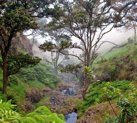 Nui Botanical Gardens by Awesome Nui Botanical Gardens Nui Botanical