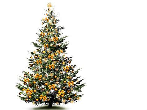 weihnachtsbaum mit photos zum anmalen so bleibt der weihnachtsbaum lange sch 246 n haus garten badische zeitung