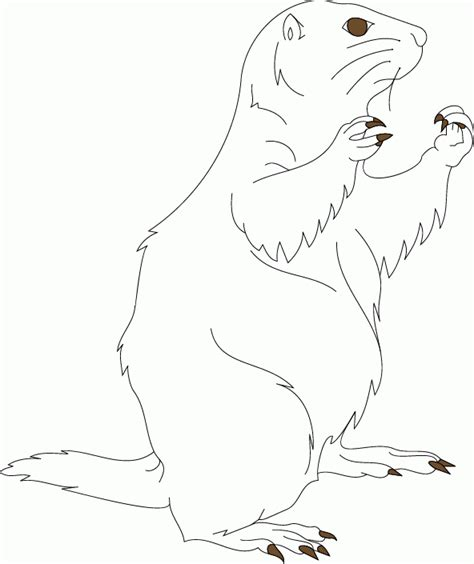 swift fox coloring page coloring page prairie dog nest how to draw a swift fox