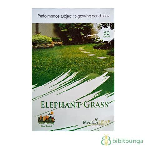 Benih Rumput Gajah Elephant Grass Pack Maica Leaf benih rumput gajah elephant grass 50 biji maica leaf bibitbunga
