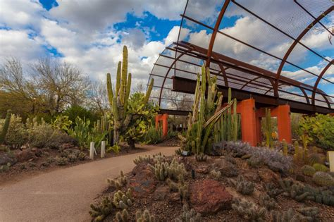 Desert Botanical Garden Culture Pass by 4 Arts Culture Must Sees With Cheap Eats