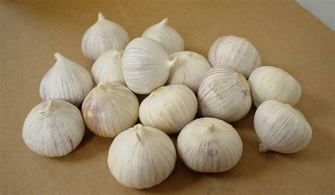 Bawang Putih Tunggal 1kg single bulb garlic products china single bulb garlic supplier