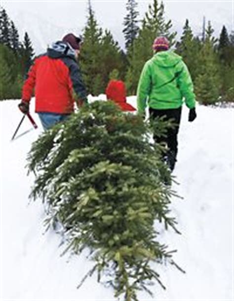 familyphotos of christmas tree cutting real tree on tree clearance trees and trees uk