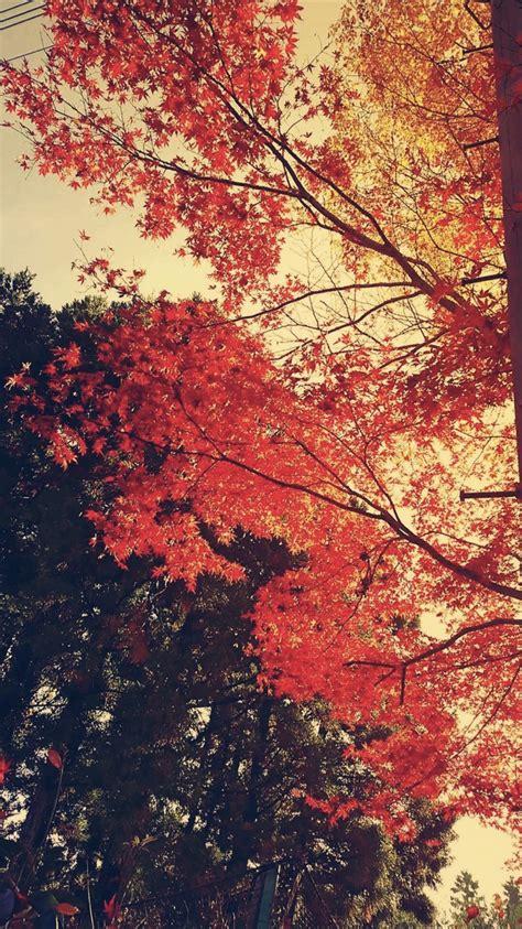 wallpaper daun gugur musim gugur daun lansekap wallpaper sc iphone7