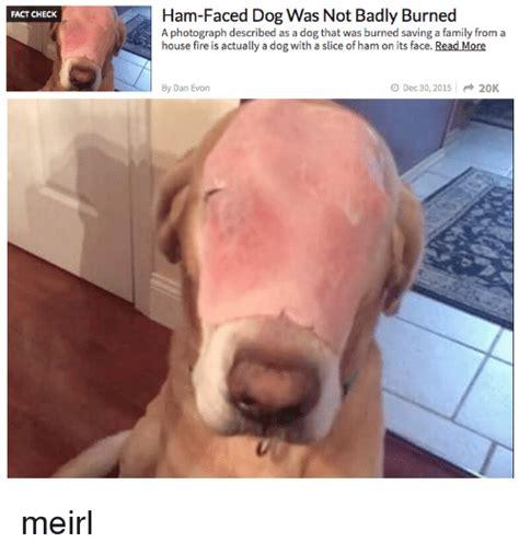 is ham bad for dogs 25 best memes about ham ham memes