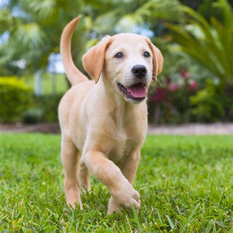 puppy academy southeastern guide dogs