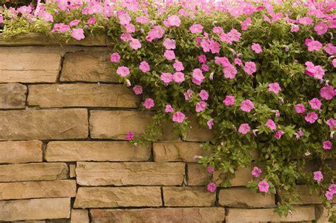 natursteinmauer garten natursteinmauer im garten 187 bauanleitung in 4 schritten