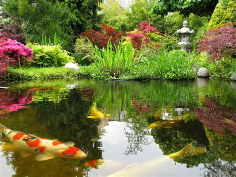 Backyard Coy Ponds by Japanese Koi Ponds Live Fish Pond Installation New York City