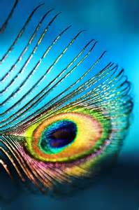 peacock feather colors peacock feather detail color my world