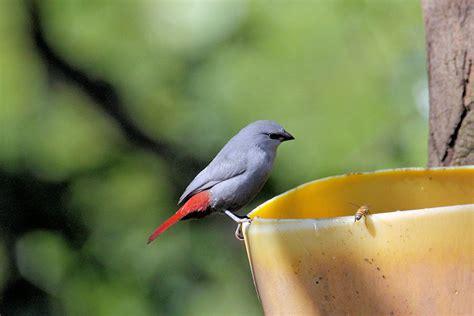 leer libro e peru natural eden of birds gratis descargar gambia