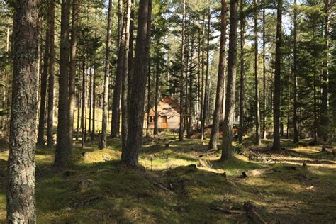 cairngorm lodges luxury  catering   forest setting