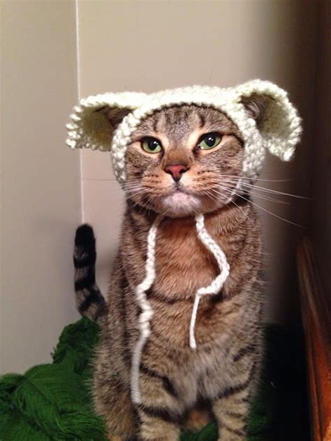 cat in hat tuesday march 17 2015