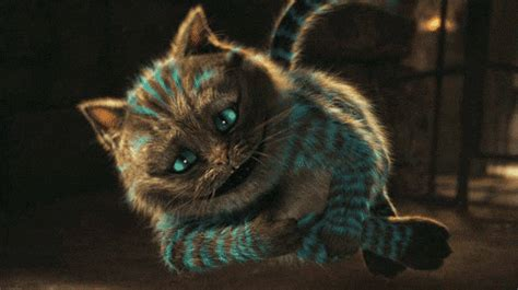 imagenes de kitty chesire gato de cheshire tumblr