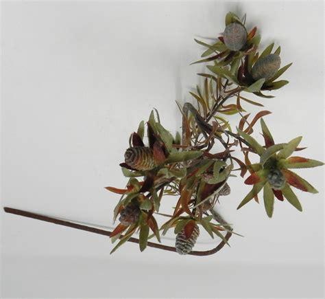fiori di loto riccione infiorescenza sudafrica fior di loto riccione