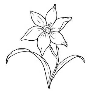 Galerry narcissus flower coloring page