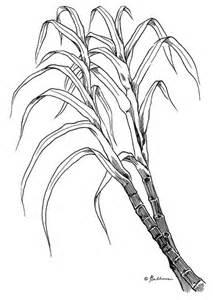 Of The Sugar Cane Plant Colouring Pages sketch template