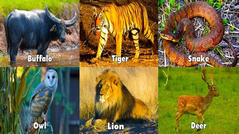 learning animals hd animals sounds  children learning wild animals sounds  kids youtube
