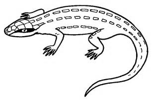lizard coloring pages animal lizard coloring sheet for print