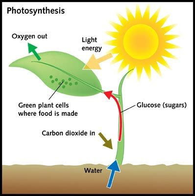 what of light do plants need how do plants grow
