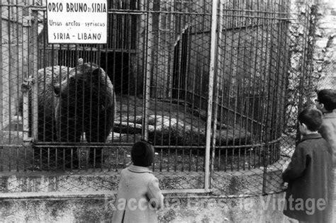 nero giardini brescia lo zoo in l orso bruno 1963