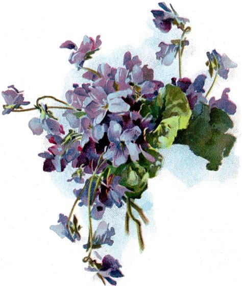 clipart pictures free vintage violets image the graphics