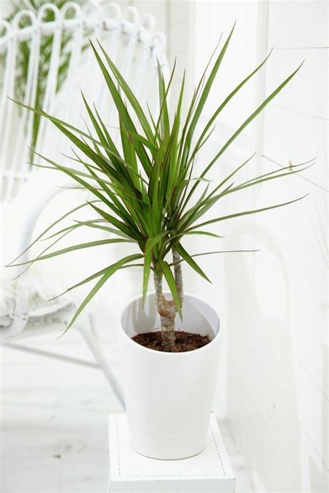easy plants easy flowers to grow indoors a useful guide for indoor