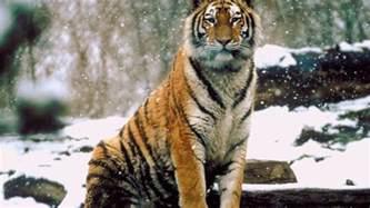 winning amazon black friday world s deadliest animals national geographic channel asia