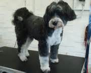 hair cuts for the tebelan terrier the dog groom room dog groomer in winsford northwich