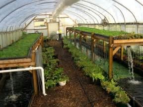 Backyard Aquaponics Greenhouse by 25 Best Ideas About Aquaponics Greenhouse On Pinterest