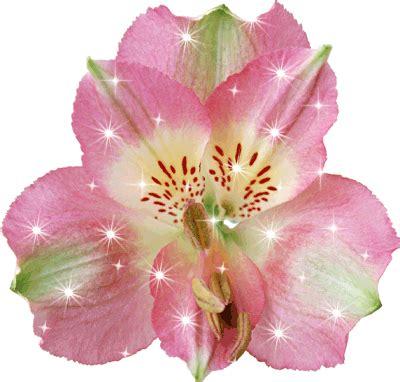 imagenes d flores animadas image gallery imagenes animadas de flores