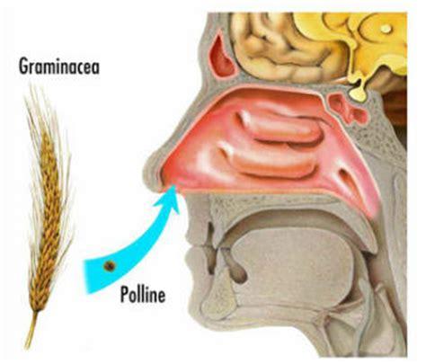 polipo anale interno allergie al polline