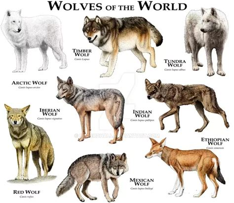 what s the difference between a scientific and what s the difference between a hyena and a wolf quora