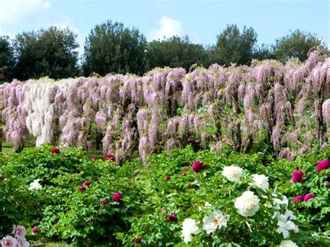 giardini in fiore foto giardini fioriti piante da giardino fiorite with