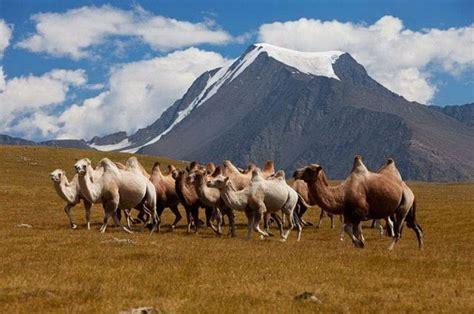 partir en mongolie arts  voyages