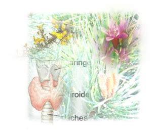 test per fiori di bach ipotiroidismo e fiori di bach test fiori di bach