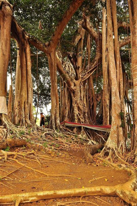 madagascar turisti per caso avventura a nosy be viaggi vacanze e turismo turisti