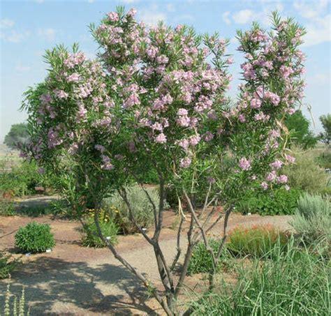 The Hilltop Landscape Architects and Contractors » Plants