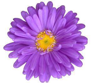 Factory Flower - purple flower weneedfun