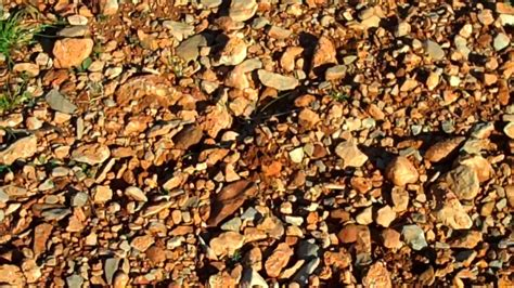 file rocky vineyard soil terroir la peira jpg wikimedia commons