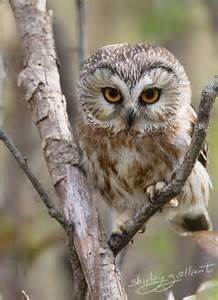 95 Best Owl Images On Animal - best 25 owl photo ideas on owl