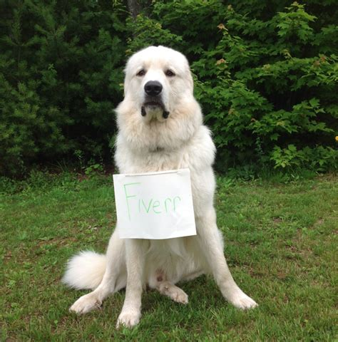 polar bear dog hold  sign fiverr