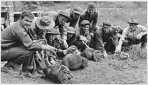 the new deal s forest army how the civilian conservation corps worked how things worked books civilian conservation corps 4 photo gallery 4