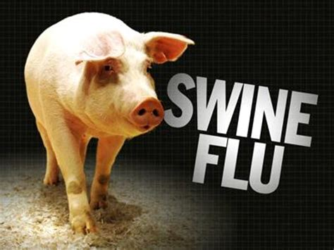 swing flu swine flu with pig stand up for america