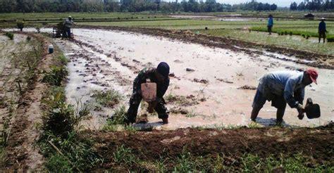 Satuan Pembersihan Lahan Tni Ad Babinsa Koramil 04 Tunjungan Bantu Perbaikan