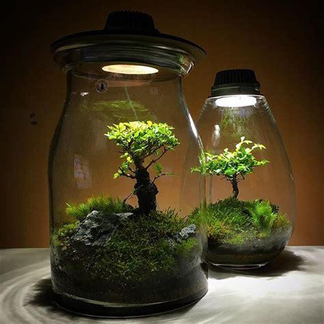 best grow light for bonsai 367 best bonsai terrariums images on pinterest