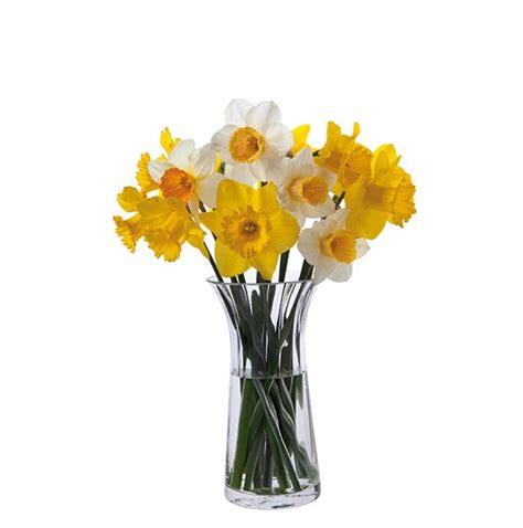 Daffodil Vase florabundance daffodil vase dartington