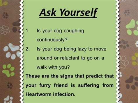 signs of heartworm in dogs heartworms in dogs signs and symptoms