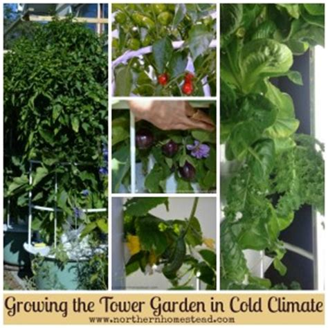 growing the tower garden in cold climate northern homestead